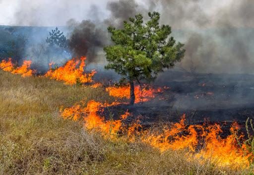 """Projeto """"Foco no Fogo"""" promove visitas em locais de Guaraí com altos índices de queimadas"""