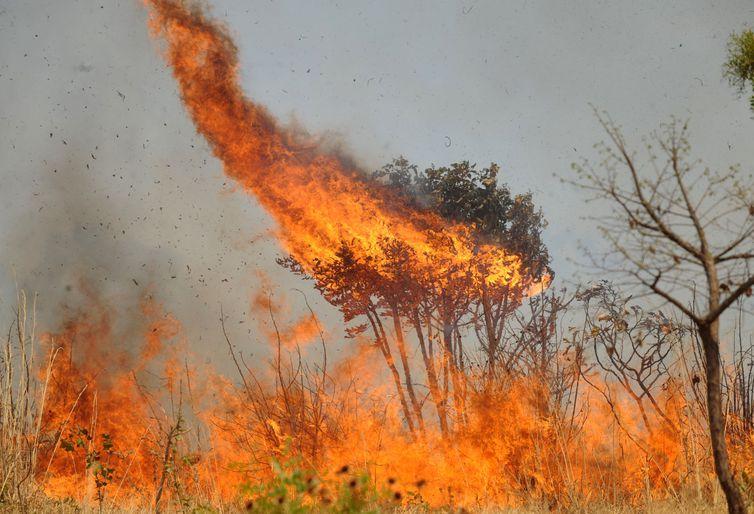 Guaraí já registra mais queimadas do que nos anos de 2018 e 2019 juntos; são 113 focos até 11/09