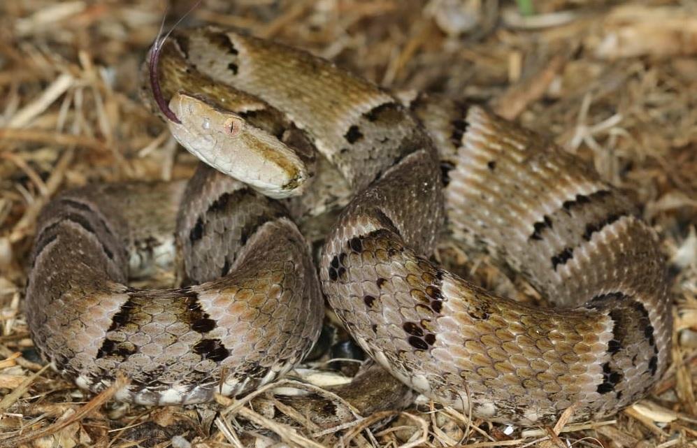 PM faz alerta sobre aumento no aparecimento de cobras em espaços urbanos do Tocantins